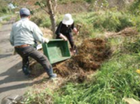 石巻市からの委託事業・オリーブ試験栽培・桜街路樹の保全活動