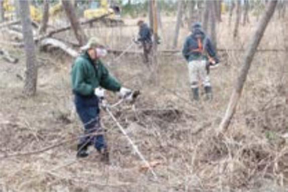 海岸林(残存林)の維持管理・下草刈りの実施